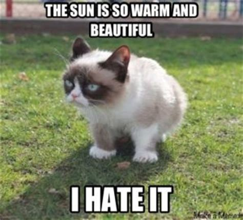 Sexy Cat Meme - top 10 funniest summer grumpy cat memes into the wild screen printing