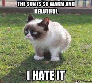 Top 10 Funniest Summer Grumpy Cat Memes – Into The Wild ...
