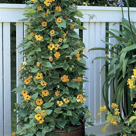 99 Best  Hanging Baskets  Full Sun Images On Pinterest