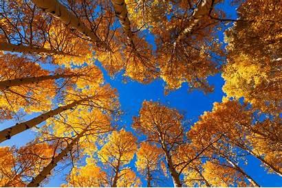 Fall Trees During Arizona Leaves Autumn Woods