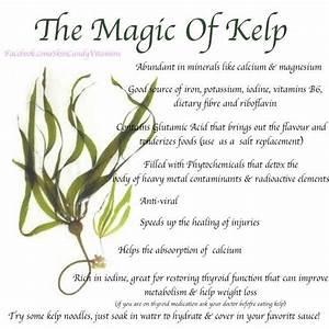 kelp powder benefits