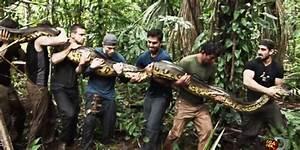 Homem será engolido por Anaconda no Discovery - Blog SKY ...