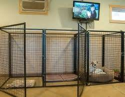 basement dog kennel  rovers ranch boarding facility