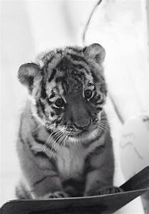 Sad baby tiger | iMessage expressions | Pinterest
