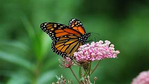 Amiel  On Spring Miracles And Monarch Butterflies