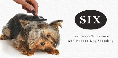 Reducing Shedding In Dogs by Six Best Ways To Reduce And Manage Shedding
