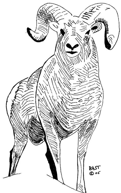 Big Horn Sheep 1 Drawing by Lloyd Bast