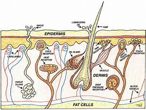 Healthy Lifestyle  Natural Healthy Skin Care Tips  U0026 Skin
