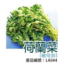 It is called 天竺鼠 because indian businessmen brought them into china. 【昀樂資材】DIY種子栽種 成就滿滿~荷蘭菜(豬母奶) | Yahoo奇摩拍賣
