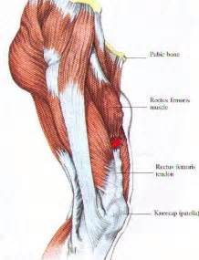 Quadriceps Muscle Strain