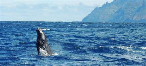 Kauai Boat Tours Poipu by Poipu Whale November To March Blue Dolphin