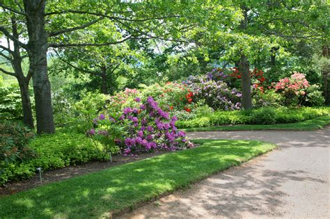 plants for shady gardens garden shade info using plants in partial shade