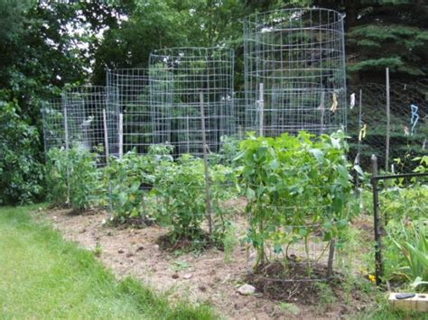 green zebra market garden make your own sturdy tomato cages