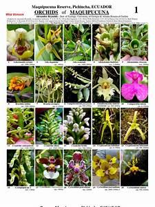 166 Maquipucuna Orchids