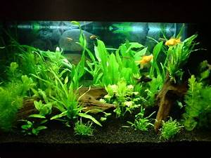 Live Fish Articles from Pet Care Corner: 10+ handpicked ...