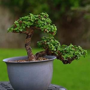 Bonsai Baum Garten : 264 besten bonsai bilder auf pinterest bonsai g rtnern ~ Lizthompson.info Haus und Dekorationen