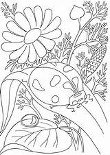 Coloring Bug Insect Printable Pages Getcoloringpages sketch template