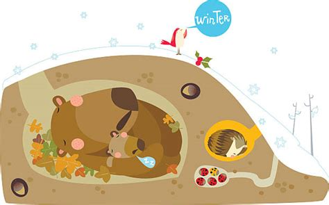 Best Hibernation Illustrations Royalty Free Vector