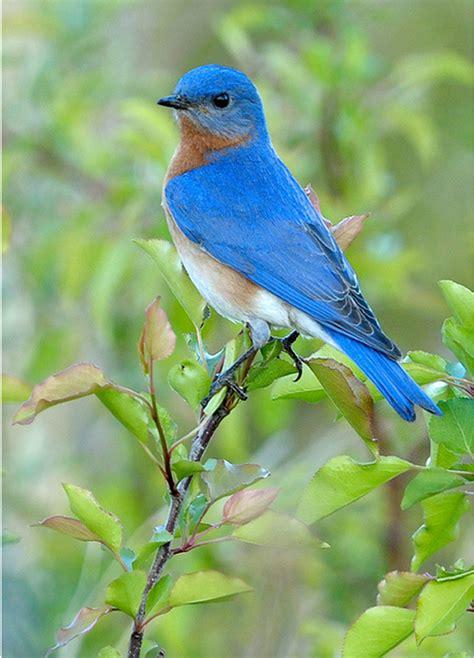 NestWatch   Landscaping for Nesting Birds - NestWatch