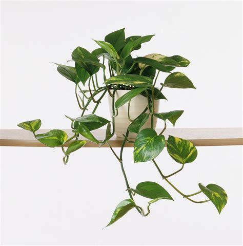 plants need sunlight don dont kill indoor plant light hard