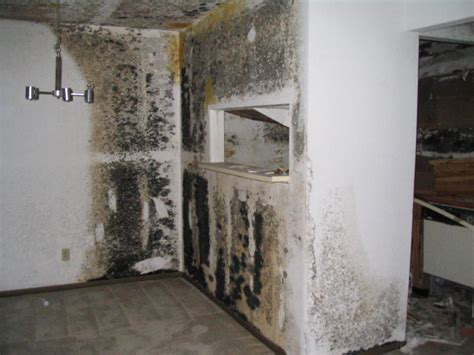 safe black mold removal  orange county ca gregory