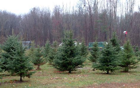 Taylor Swift, Christmas Trees And Pa