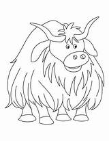 Yak Coloring Pages Cow Colouring Highland Bestcoloringpages Sheets Yaks Printable Template Voluminous Sheet Colors Sketch Animal Worksheet Coloriage Bar Animaux sketch template