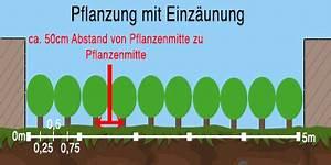 Thuja Hecke Abstand : wie gro muss der pflanzabstand bei heckenpflanzen sein ~ A.2002-acura-tl-radio.info Haus und Dekorationen