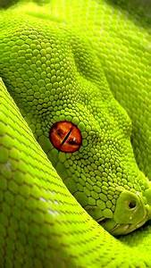 1000 ideas about Colorful Snakes on Pinterest