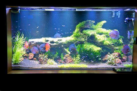 led aquarium lighting planted tank led aquarium lighting blog orphek orphek pr 72 led