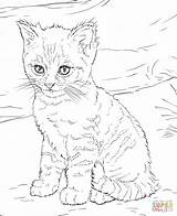 Cat Hard Coloring Pages Cats Getdrawings sketch template