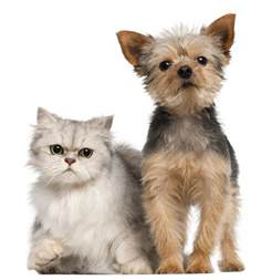 dogs that are with cats how to give your or cat a physical checkup animal