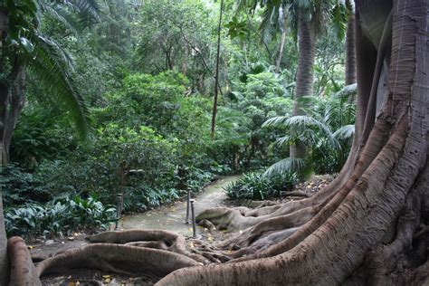 Botanischer Garten Malaga by Jard 237 N Bot 225 Nico Hist 243 La Concepci 243 N De M 225 Laga