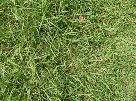 common types of grass grass types that thrive in granbury tx lawns lawnstarter