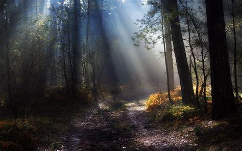 Nature Landscape Trees Forest Wallpapers Hd Desktop
