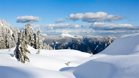 landscaping in winter winter landscape images www pixshark com images galleries with a bite