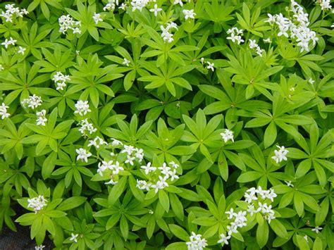 super natural landscapes plant list whistler