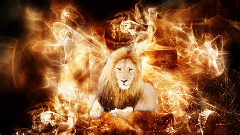 lion tiger wallpaper   hd colour design chainimage