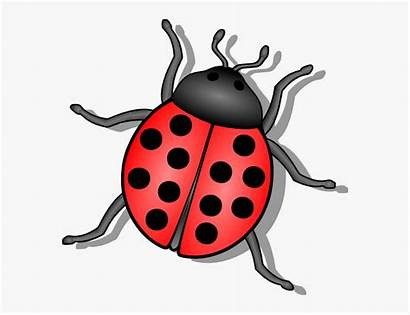 Clip Clipart Insect Bug Lady Svg Arts
