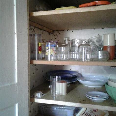 blatte de cuisine je veux me débarrasser et éliminer des blattes ou des