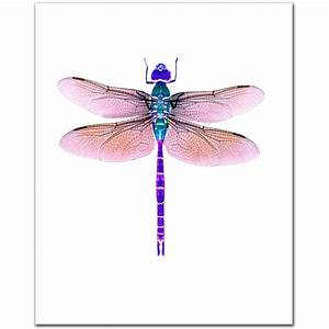 Delicate Dragonfly Clipart 20 Free Cliparts