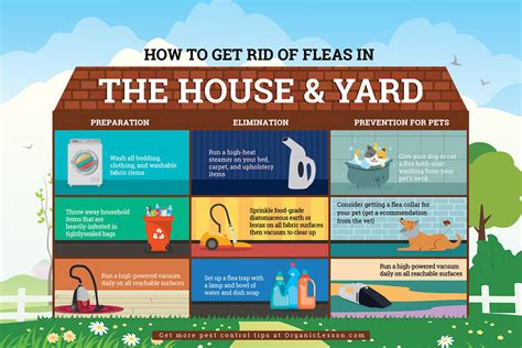 rid  fleas fast  home remedies