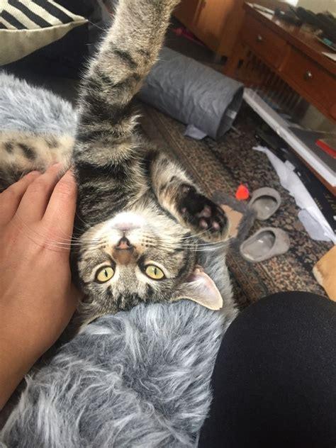 do cats like head rubs