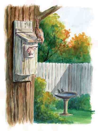 build basic birdhouse nature environment mother earth news