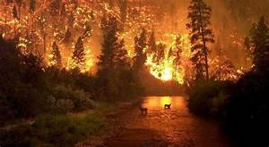 La Repam Sobre Los Incendios En La Amazon U00eda   U0026quot Que Se Ponga Fin A Esta Situaci U00f3n U0026quot