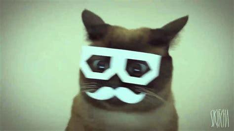 stereo skifcha dubstep cat  hour loop youtube