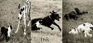 37 best Early Great Danes images on Pinterest | Great ...