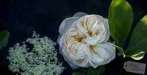 Rose Aus Holz : rosenkavalier ein obelisk aus holz selbst gebaut living green ~ Eleganceandgraceweddings.com Haus und Dekorationen