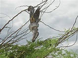 Slang eet roofvogel · forumonderwerp