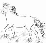 Horse Coloring Pages Miniature Printable Getcolorings sketch template